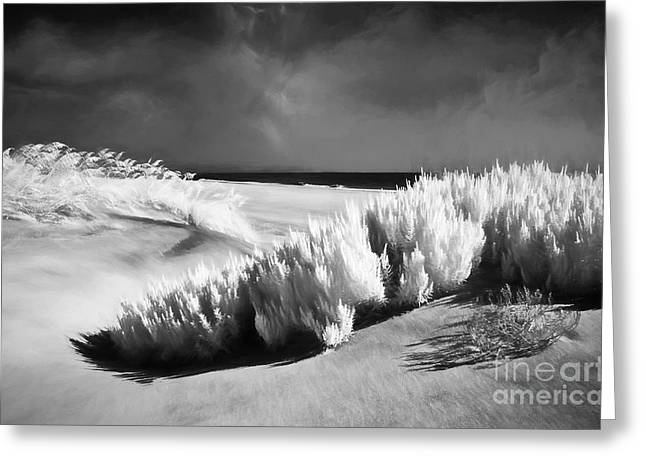 Sand Dunes Paintings Greeting Cards - Drifting Sands II Greeting Card by Dan Carmichael