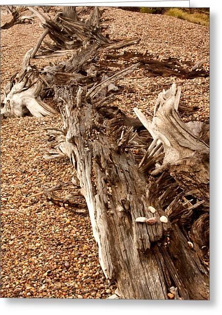 Stone Ground Greeting Cards - Driftwood Greeting Card by Amanda Kiplinger