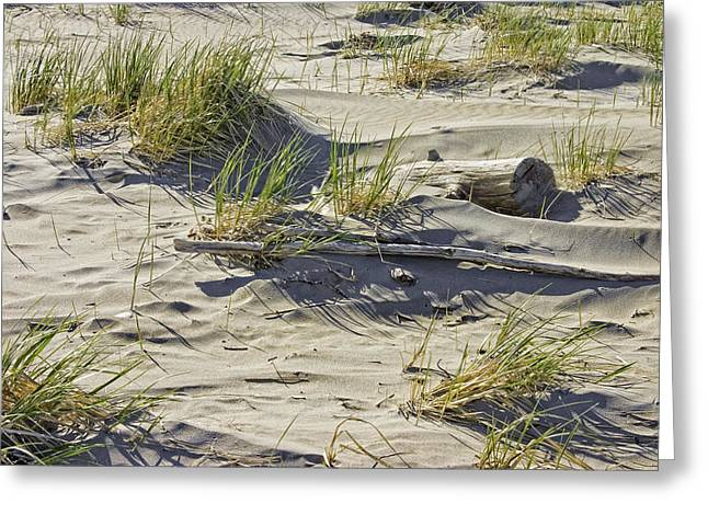 Maine Beach Greeting Cards - Driftwood and Beach Grass Popham Beach Maine Greeting Card by Keith Webber Jr