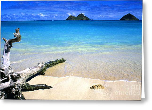 Driftwood And Islands Greeting Card by Thomas R Fletcher