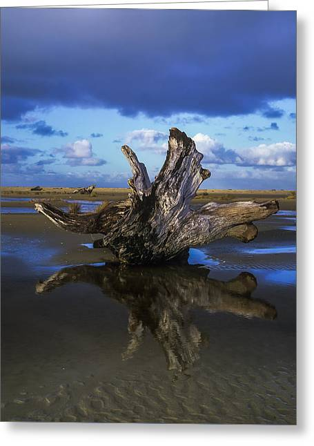 Oregon Dunes National Recreation Area Greeting Cards - Driftwood and Reflection Greeting Card by Robert Potts