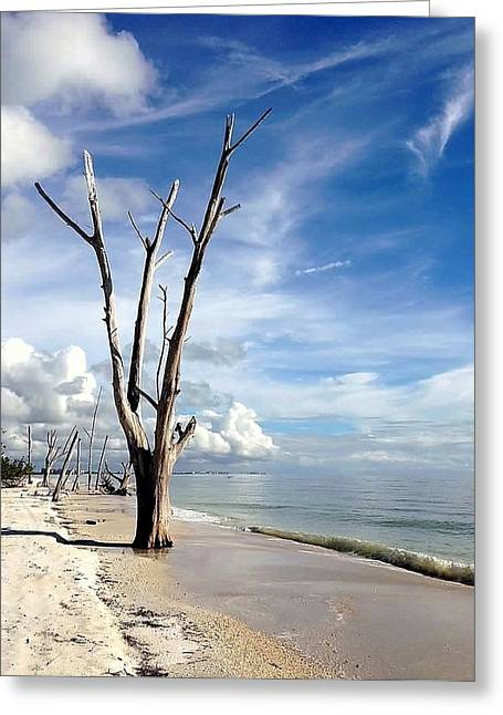 Greeting Cards - Driftwood at Lovers Key State Park Greeting Card by Janet King