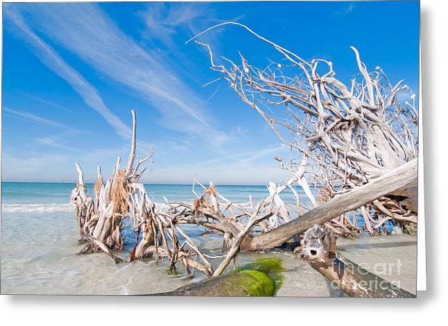 Anna Maria Island Greeting Cards - Driftwood C141348 Greeting Card by Rolf Bertram