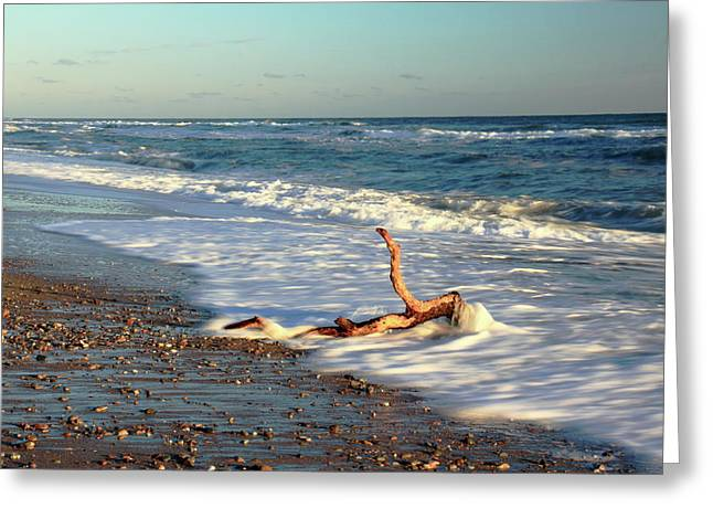 Marconi Beach Greeting Cards - Driftwood in the surf Greeting Card by Roupen  Baker
