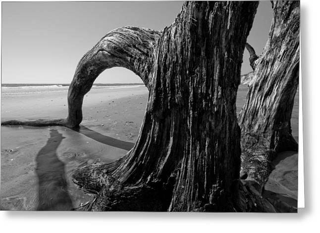 Driftwood Greeting Cards - Driftwood on the Beach Greeting Card by Dustin K Ryan