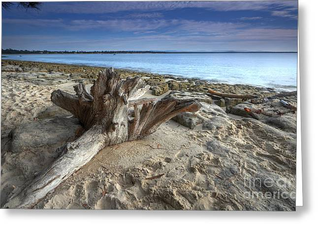 Caost Greeting Cards - Driftwood on the beach Greeting Card by Leah-Anne Thompson