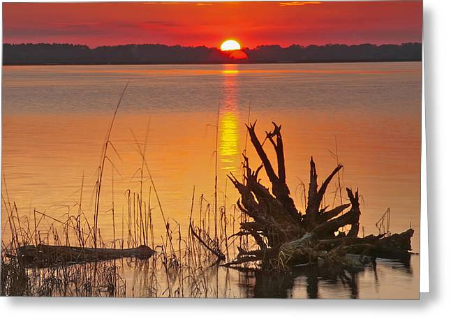 Sunset Framed Prints Greeting Cards - Driftwood Greeting Card by Phill  Doherty