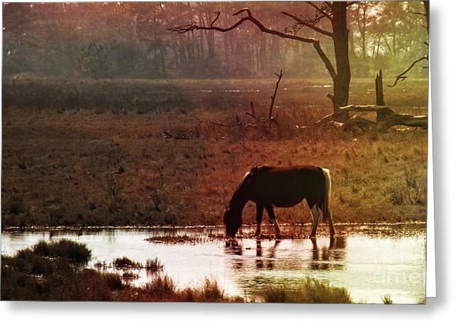 Silhouettes Of Horses Greeting Cards - Drink Of Water Greeting Card by Tom Gari Gallery-Three-Photography