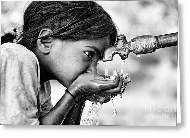 Drinking Water Greeting Card by Tim Gainey