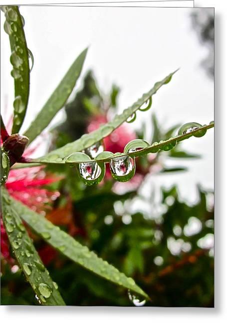 Rain Drop Greeting Cards - Drip and Drop Greeting Card by Gwyn Newcombe