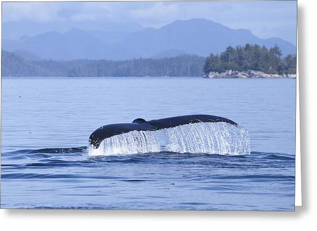 Ocean Mammals Greeting Cards - Dripping Whale Fluke Greeting Card by Michele Cornelius