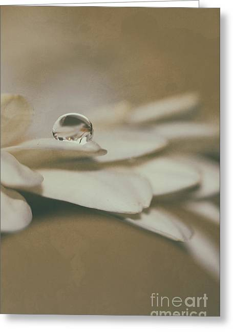 Drop Of Angel Wings Greeting Card by SK Pfphotography