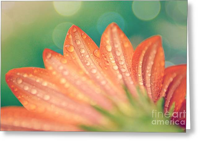Color Enhanced Greeting Cards - Droplet Dappled Blossom Greeting Card by Kelly Nowak