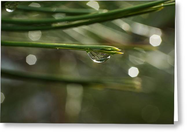 Pine Needles Greeting Cards - Droplet Greeting Card by Jeff  Swan