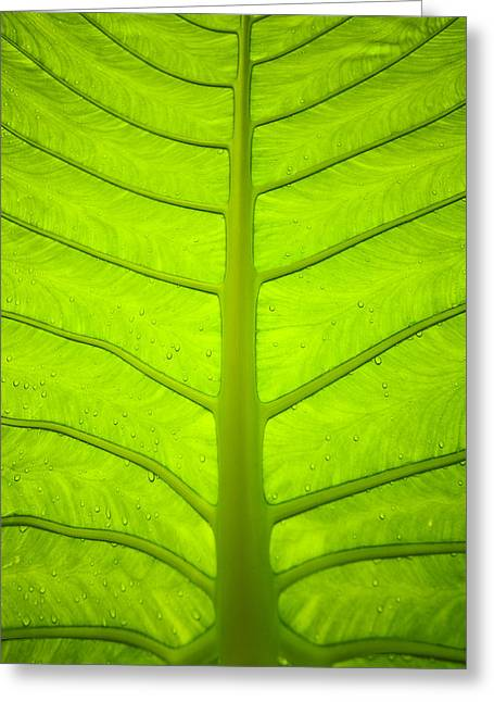 Droplets On Green Leaf Greeting Card by Bill Brennan - Printscapes
