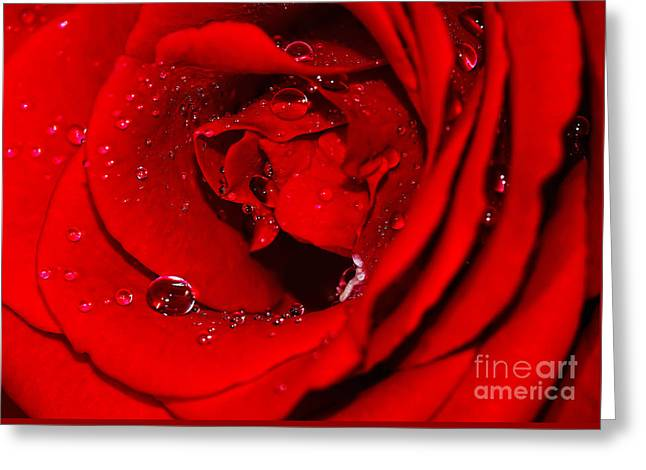 Droplets On Red Rose By Kaye Menner Greeting Card by Kaye Menner