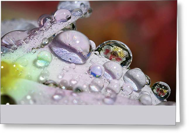 Drops Of Light Greeting Card by Gary Yost