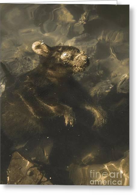 Drowned Tasmanian Possum Greeting Card by Jorgo Photography - Wall Art Gallery