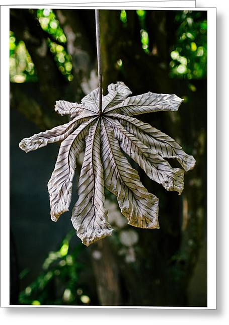 Series Dry Trees Greeting Cards - Dry Leaf Collection 1 Greeting Card by Totto Ponce