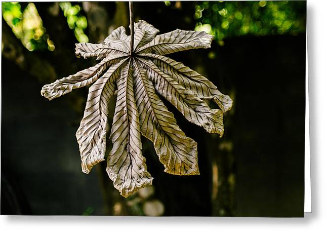 Series Dry Trees Greeting Cards - Dry Leaf Collection 2 Greeting Card by Totto Ponce