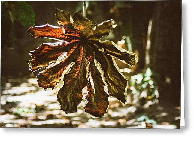 Series Dry Trees Greeting Cards - Dry Leaf Collection 3 Greeting Card by Totto Ponce