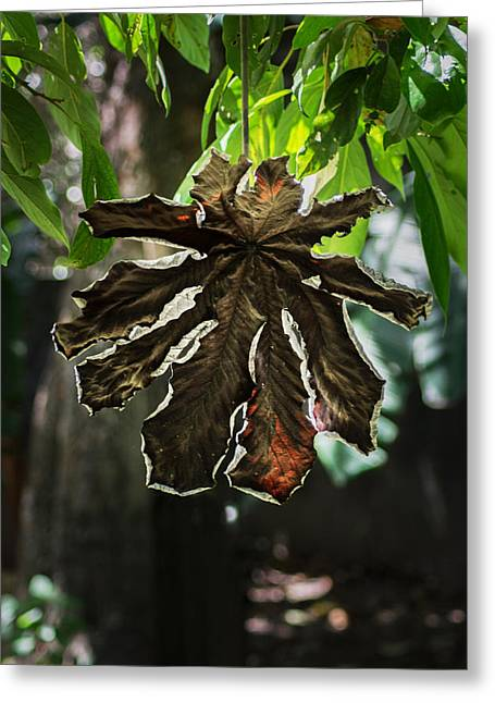 Series Dry Trees Greeting Cards - Dry Leaf Collection Greeting Card by Totto Ponce