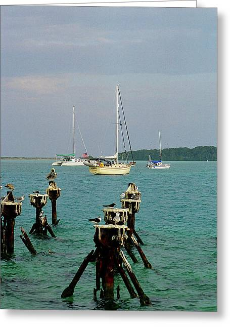Dry Tortuga Sail Boats Greeting Card by Henri Irizarri