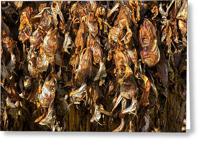 Drying Fish Heads - Iceland Greeting Card by Stuart Litoff