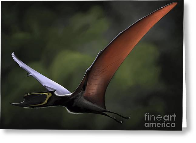 Best Sellers -  - Hunting Bird Greeting Cards - Dsungaripterus With Wings Spread Greeting Card by Michele Dessi