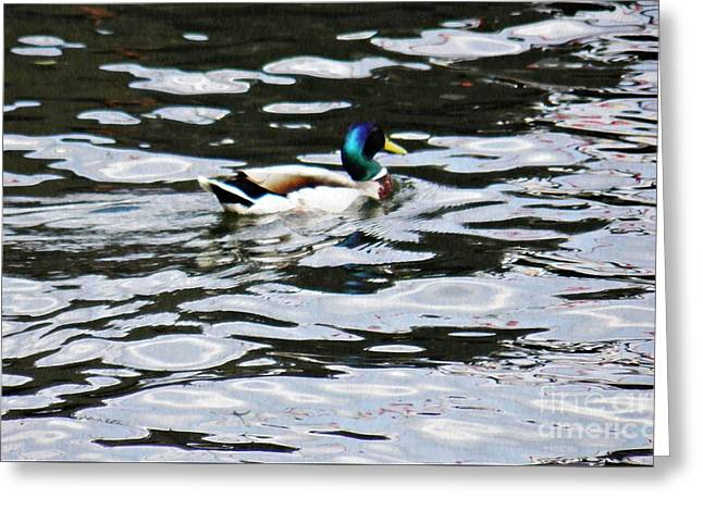 Water Fowl Greeting Cards - Duck in the Water Greeting Card by Sarah Loft
