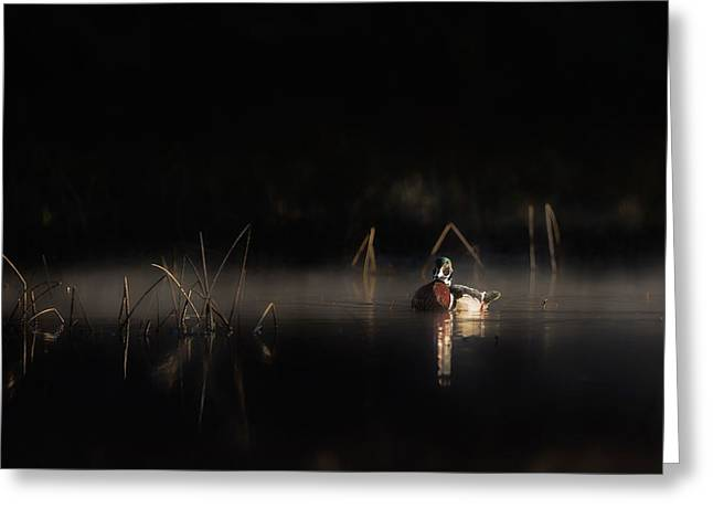 Dramatic Lighting Greeting Cards - Duck of the Morning Mist Greeting Card by Bill Wakeley