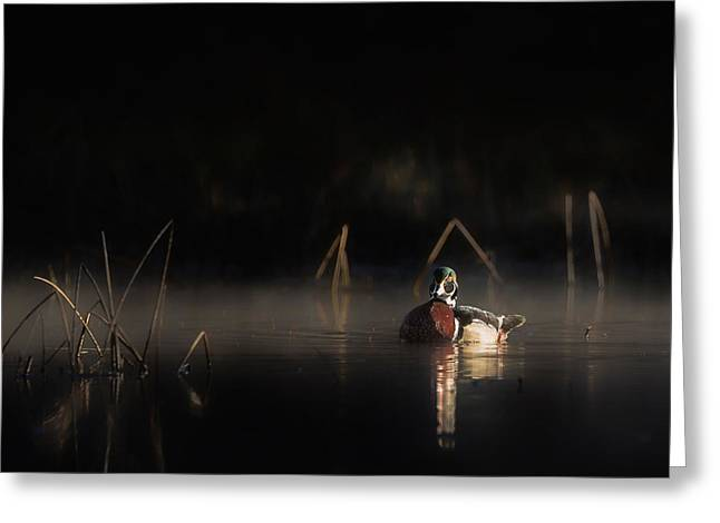 Swamps Greeting Cards - Duck of the Morning Mist Square Greeting Card by Bill Wakeley