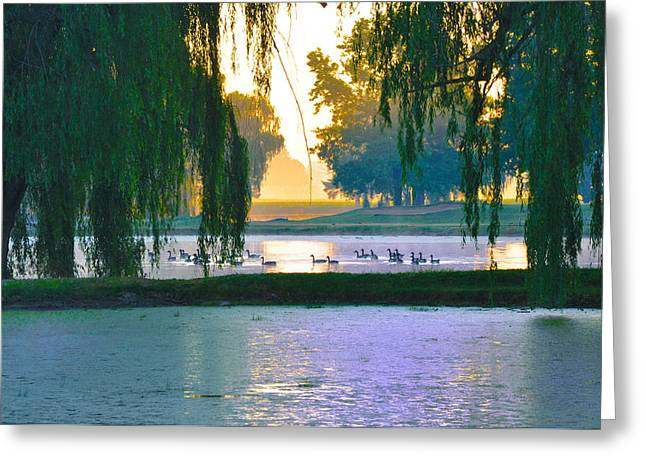 Duck Pond At Dawn Greeting Card by Bill Cannon