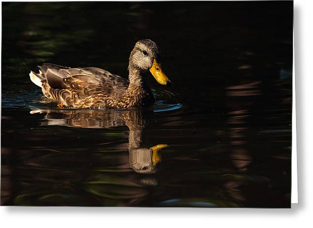 Reflecting Water Greeting Cards - Duck Reflection Greeting Card by Karol  Livote