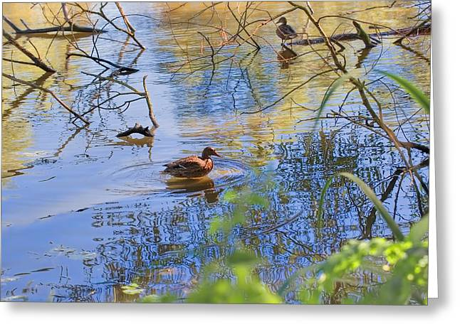 Reflecting Water Greeting Cards - Duck reflection Greeting Card by Leif Sohlman