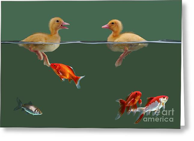 Mixed Species Greeting Cards - Ducklings And Goldfish Greeting Card by Jane Burton