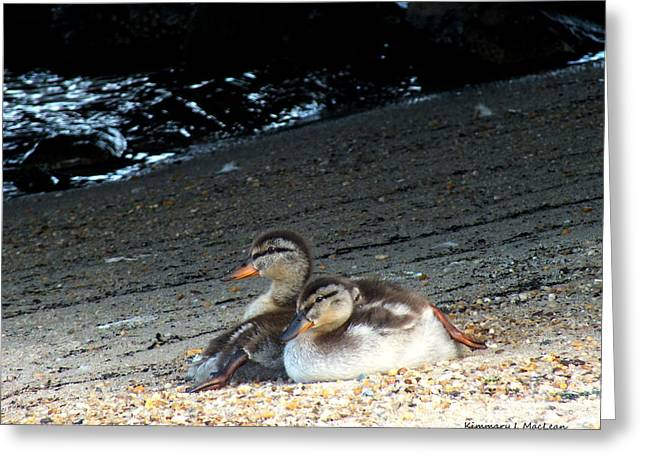 Beach Photography Greeting Cards - Ducklings on the Beach Greeting Card by Kimmary I MacLean
