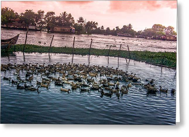 Ducks At Backwaters Around Alleppey, Kerala, India Greeting Card by Art Spectrum