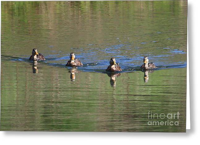Ripples In Water Greeting Cards - Ducks in a Row Greeting Card by Carol Groenen
