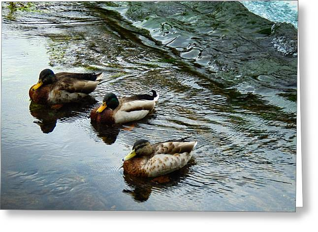 Hunting Bird Greeting Cards - Ducks in a Row Greeting Card by Felikss Veilands