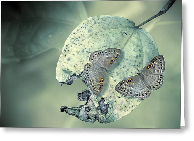 Costa Photographs Greeting Cards - Duet Greeting Card by Jimmy Hoffman