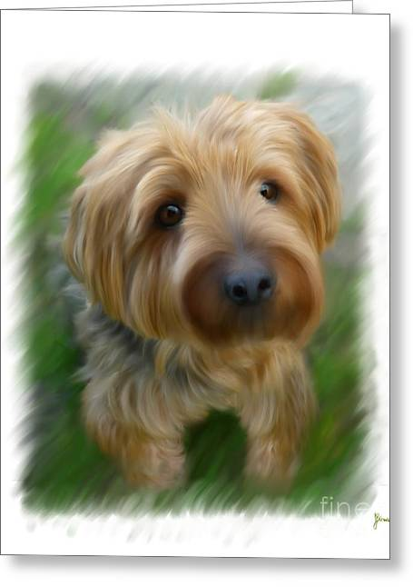 Shih-tzu Greeting Cards - Dukey Greeting Card by Jeff Breiman