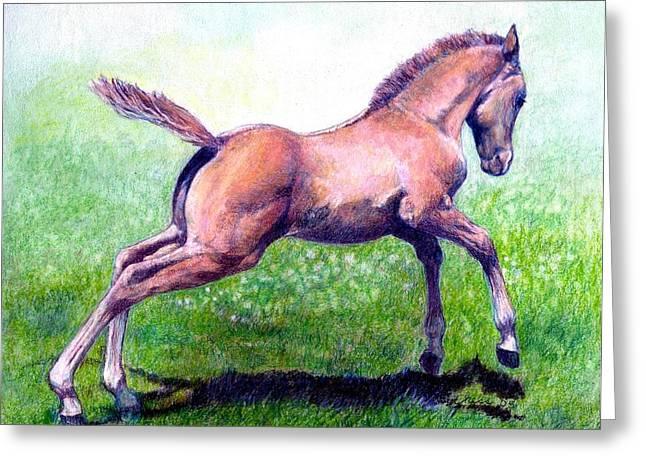 Quarter Horses Drawings Greeting Cards - Dun Quarter Horse Foal Portrait Greeting Card by Olde Time  Mercantile