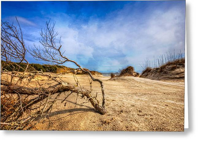 Fog At Sea Greeting Cards - Dune Driftwood Greeting Card by Debra and Dave Vanderlaan