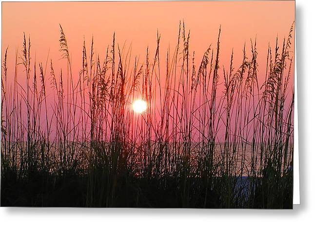 Beach Photograph Greeting Cards - Dune Grass Sunset Greeting Card by Bill Cannon