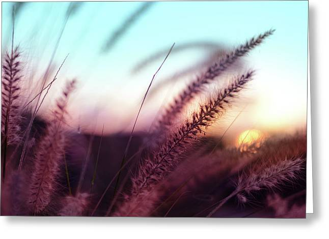 Dune Scape Greeting Card by Laura Fasulo