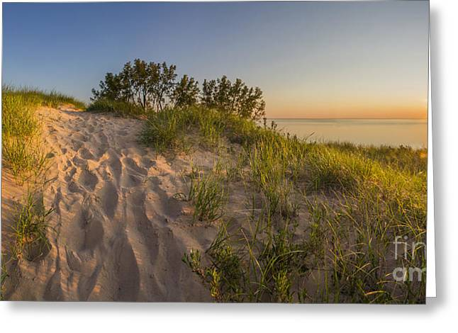 Scenic Drive Greeting Cards - Dunegrass at Sunset Greeting Card by Twenty Two North Photography