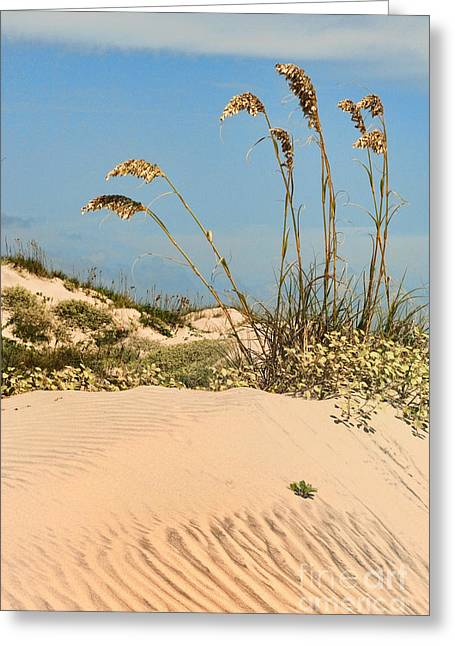 Sand Pattern Greeting Cards - Dunes and Sea Oats Greeting Card by Barbara Rabek