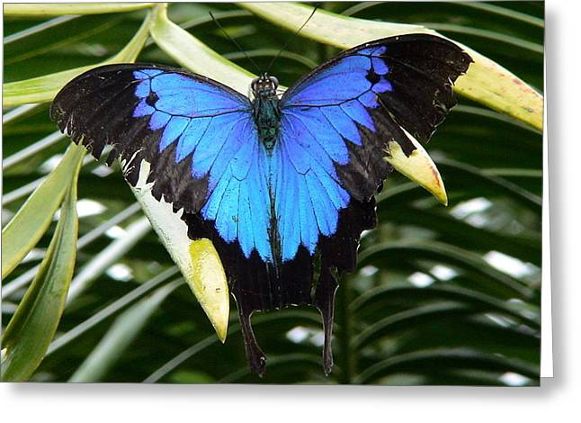 Dunk Butterfly In Oz Greeting Card by D Scott Fern