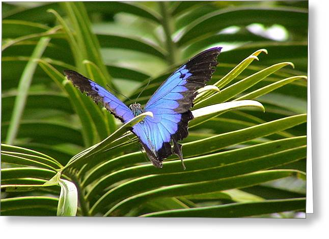 Dunk Butterfly Resting Greeting Card by D Scott Fern